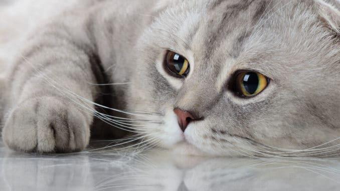 ältere Katze