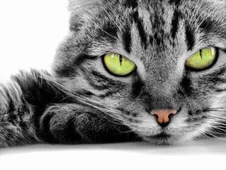 Blick einer Katze