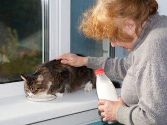 alte Frau gibt einer Katze Milch