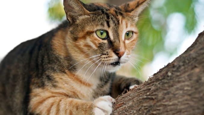 Katze auf einem Baumstamm