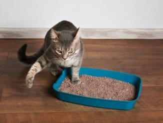 Katzen Welpe im Katzenklo