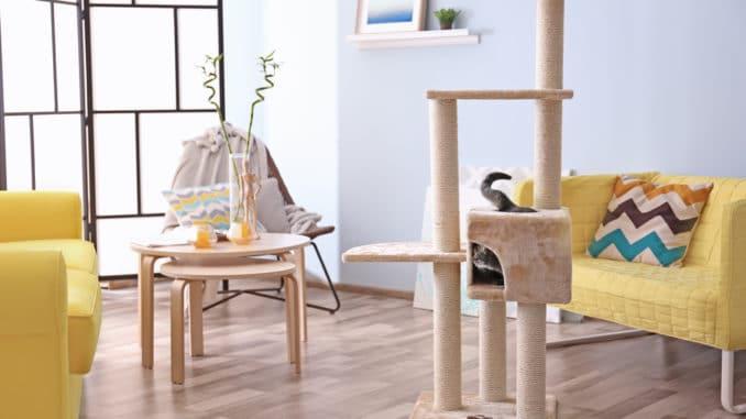 Katze auf Kratzbaum im Wohnzimmer
