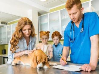 Hund mit Bandscheibenvorfall beim Tierarzt