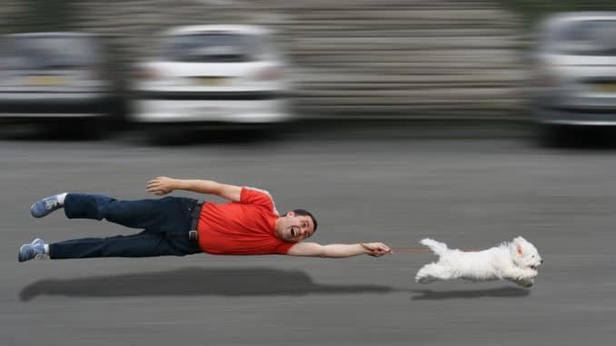 Ungehorsamer Hund zieht einen Mann