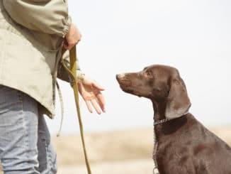 Hund und Hundetrainer