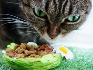 Katze frisst Katzenfutter mit Vitalstoffen
