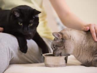2 Katzen fressen am Katzennapf
