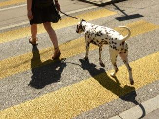 Frau mit Hund auf einem Zebrastreifen
