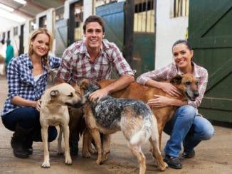 Drei Hofhunde mit Besitzern