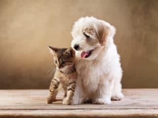 Beste Freunde - Hund und Katze