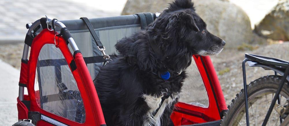 Fahrradanhänger für den Hund