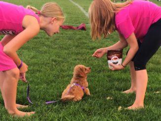 Hundetraining mit einem Welpen
